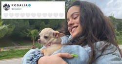 Enlace a Rosalía sube unas fotos con su chihuahua y los zapatos más feos que verás en tu vida, y la revientan a memes