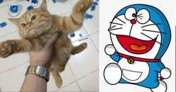Enlace a Construye una figura de 2.500 piezas en dos semanas y su 'adorable' gato lo destruye en apenas unos segundos
