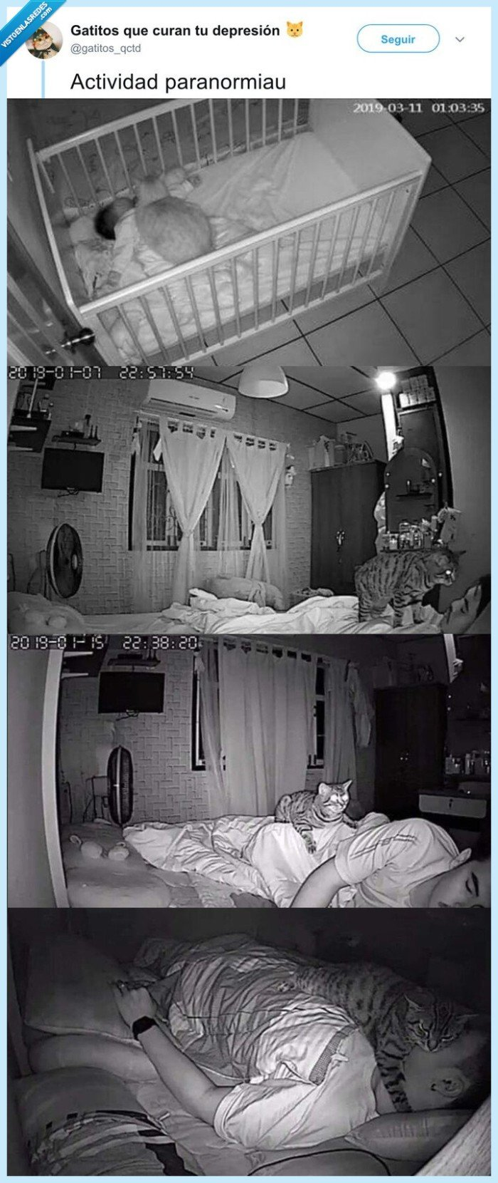 actividad paranormal,camara,gato