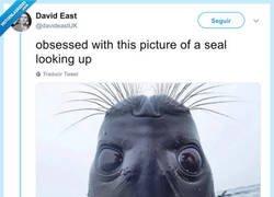 Enlace a Esta foca mirando hacia arriba me ha arreglado el día, por @davideastUK