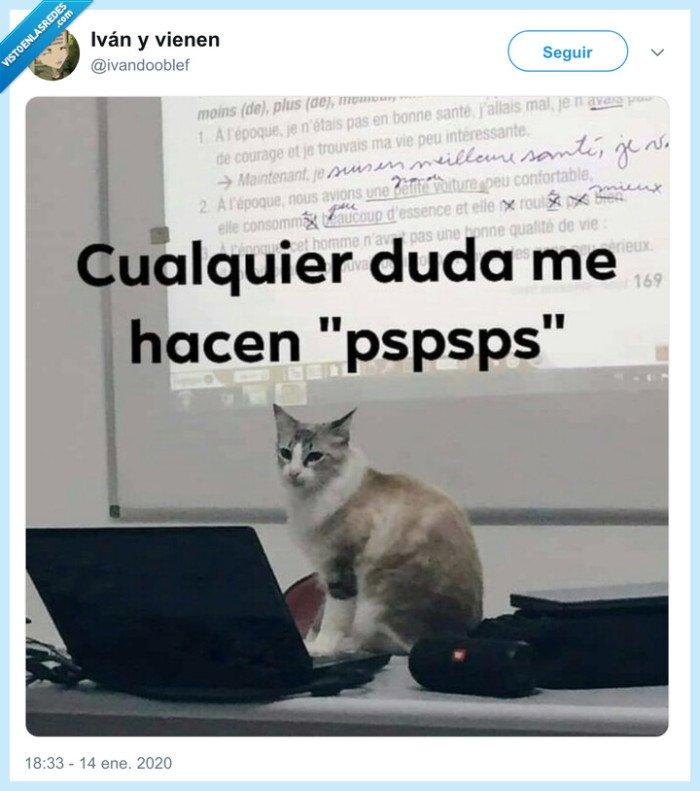 clase,dudas,gato,profesor,pspspspsps