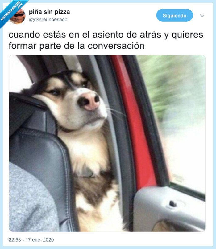 asiento,coche,conversación,en medio,perro