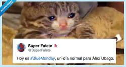 Enlace a Los memes del 'Blue Monday', el día más triste del año, que harán que sea un poco menos triste