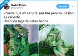 Enlace a Cosas de lagartos, por @MaylaifDhisis