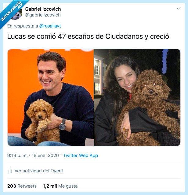 Albert Rivera,Ciudadanos,Lucas,perro,Rosalía