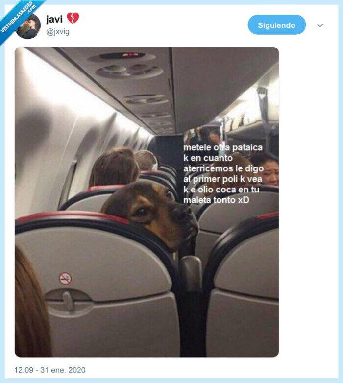 avión,pataditas,perro