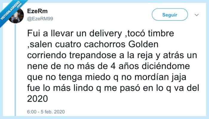 cachorros,delivery,golden,morder,niño,perros