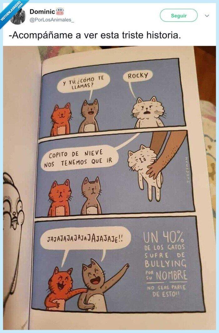 cursi,gato,nombre