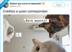 Enlace a Lo último que ve un ratón antes de ser devorado, por @gatitos_qctd