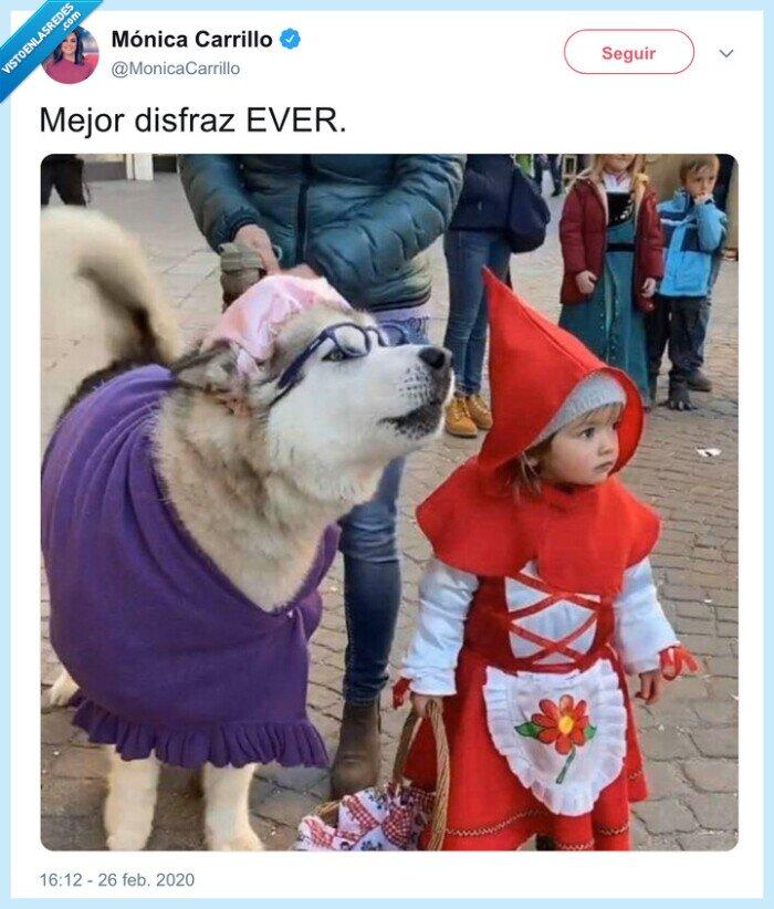 caperucita,lobo,niña,perro