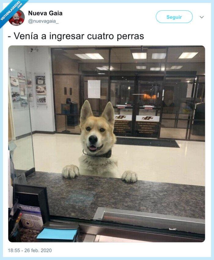 banco,ingresar,perras,perro