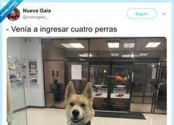 Enlace a Un perro ahorrador, por @nuevagaia_