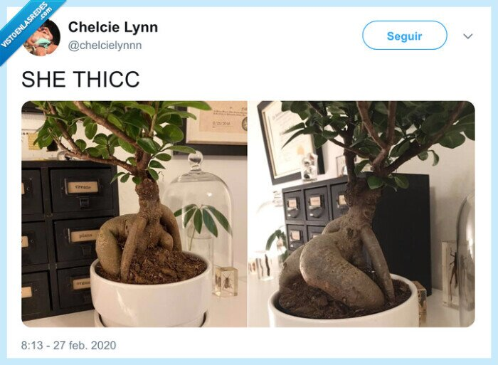planta,tronco,twerking