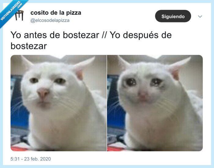bostezar,gato,lágrimas,lunes