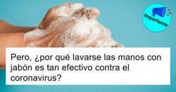 Enlace a El hilo de Twitter que explica por qué lavarse bien las manos es tan efectivo contra el coronavirus