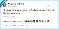 Enlace a Están flipando, por @mdemagnesio
