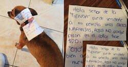 Enlace a Este chico confinado manda a su perro a por cheetos y el final de la historia no está nada mal