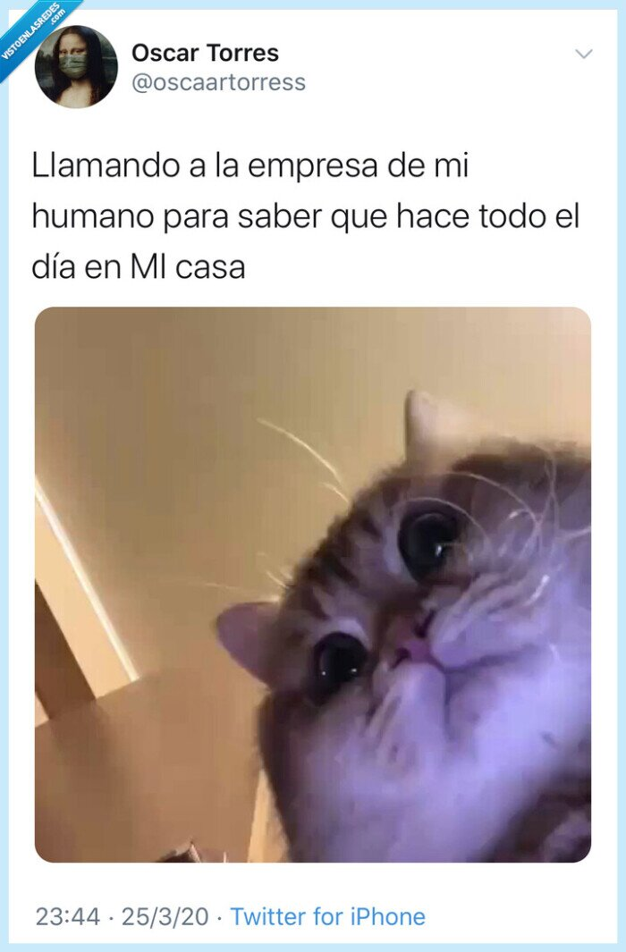 coronavirus,covid19,cuarentena,gracioso,meme,risa,tweet,twitter