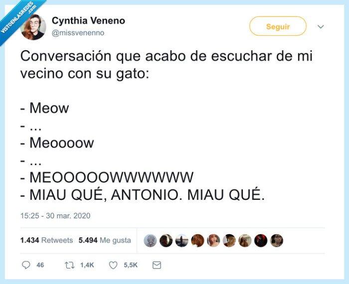 conversar,gato,locura,miau
