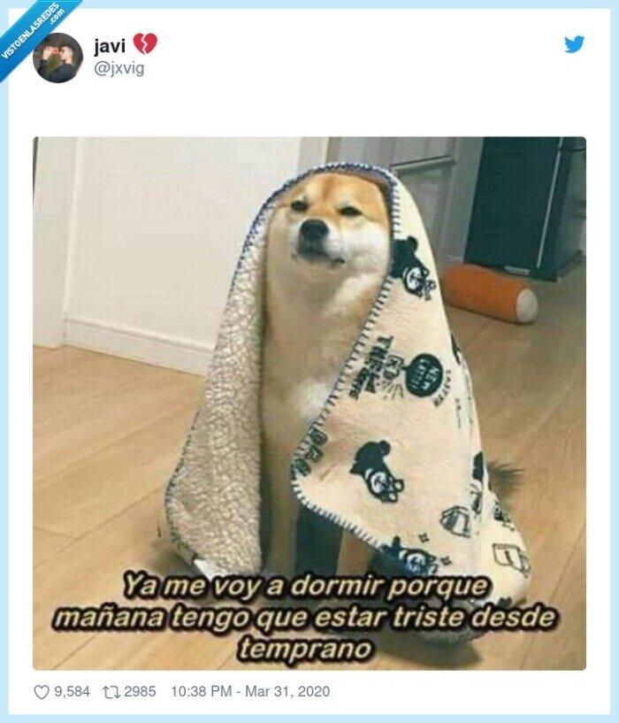 cuarentena,manta,perro