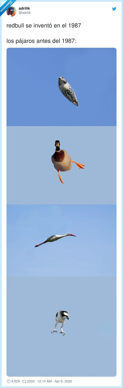 1987,antes,invento,pájaros,redbull