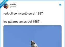Enlace a ¿Que c*ño pinta el pato?, por @adrilik