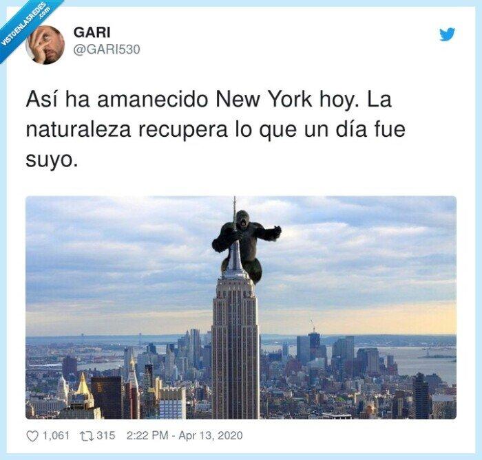 amanecido,gorila,king kong,naturaleza,nueva york,recupera