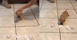Enlace a Dejan que este perrito escoja su futuro nombre entre unos cuantos papeles, por @menncis