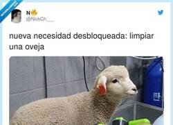 Enlace a No tengo una oveja y ahora sé que la necesito , por @NickCh___