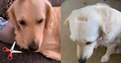 Enlace a En tiempos de cuarentena, mucha gente le corta el pelo a sus mascotas. 1 minuto de silencio para este perro, por @shecannutbread