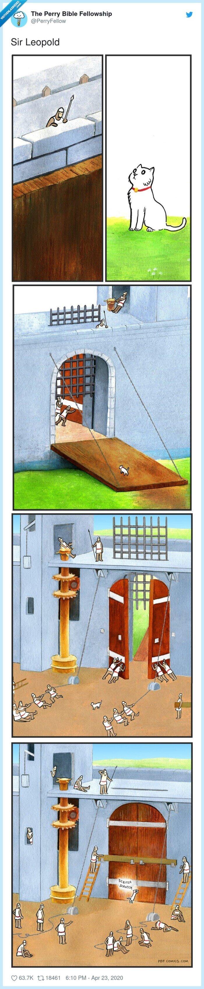 gato,puerta,rascar