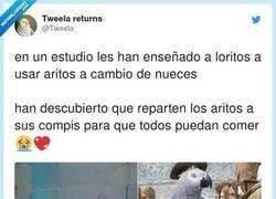 Enlace a Viva los loros de cola roja, por @Tweela_