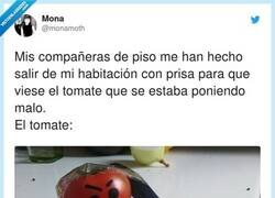 Enlace a Tomates delincuentes, por @monamoth