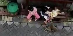 Enlace a Un mono en moto intenta raptar a una bebé y las redes se quedan en shock