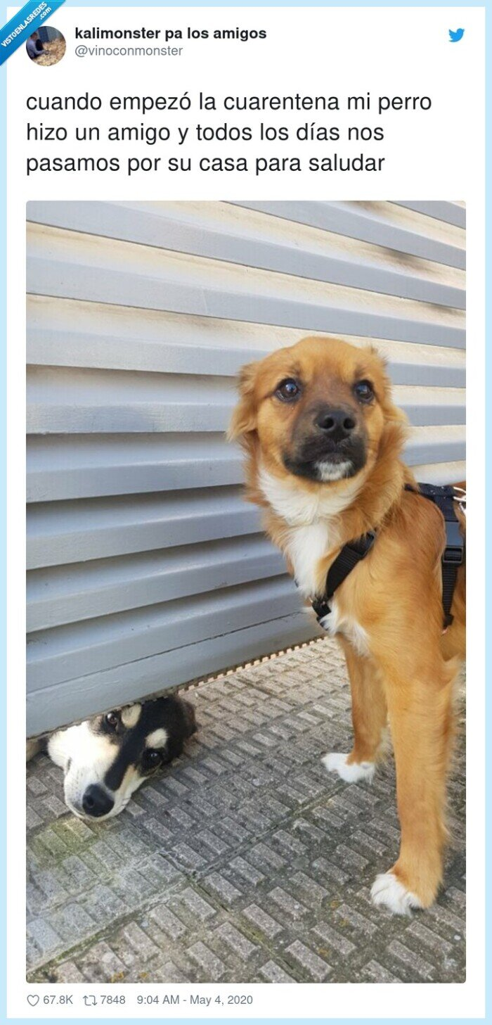 cuarentena,empezó,pasamos,perro,saludar