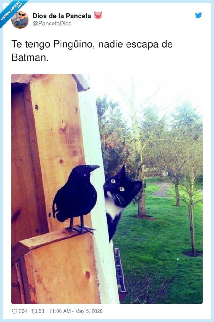 batman,escapar,nadie,pingüino,tengo
