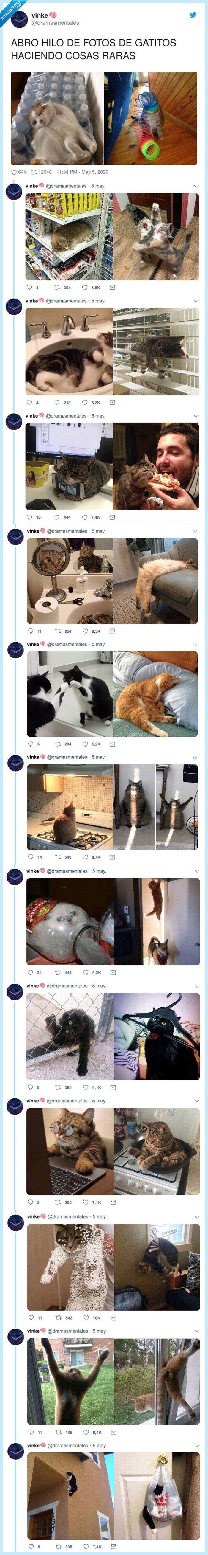 cosas raras,fotos,gatitos