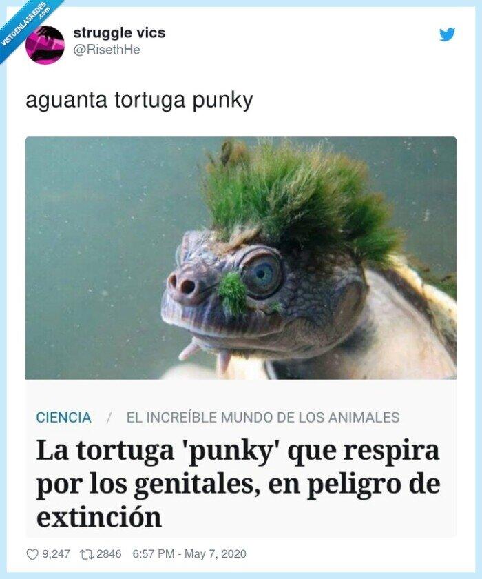 aguanta,tortuga punky