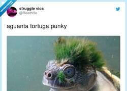 Enlace a Punk turtle is not death, por @RisethHe