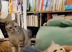 Enlace a Ven aquí gatito y te doy yo cariñitos, por @laayuwoki