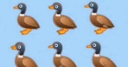Enlace a Reto visual: ¿Cuántos patos ves en la ilustración?