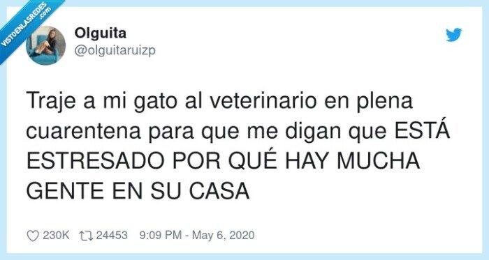 cuarentena,estresado,gato,veterinario