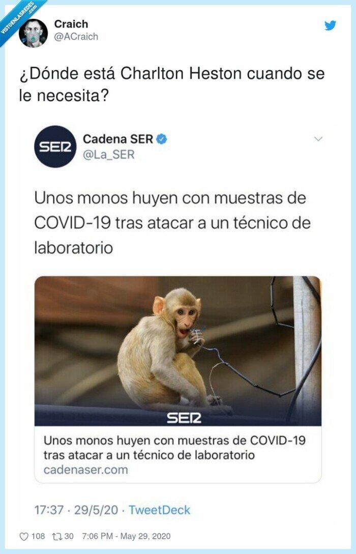 coronavirus,covid,laboratorio,monos,robar