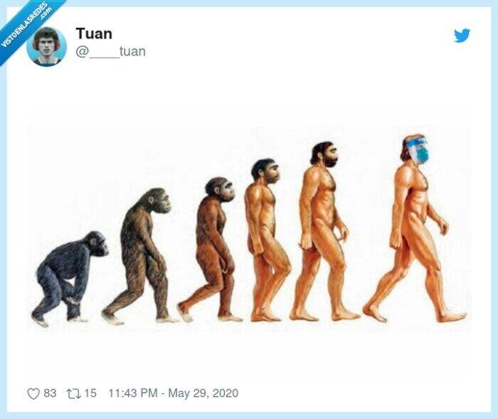 evolución,hombres,mono