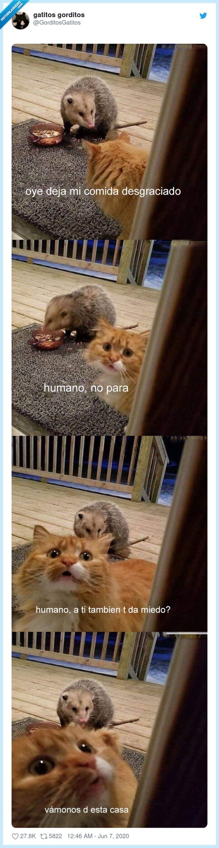 comida,gato,robar,zarihuella