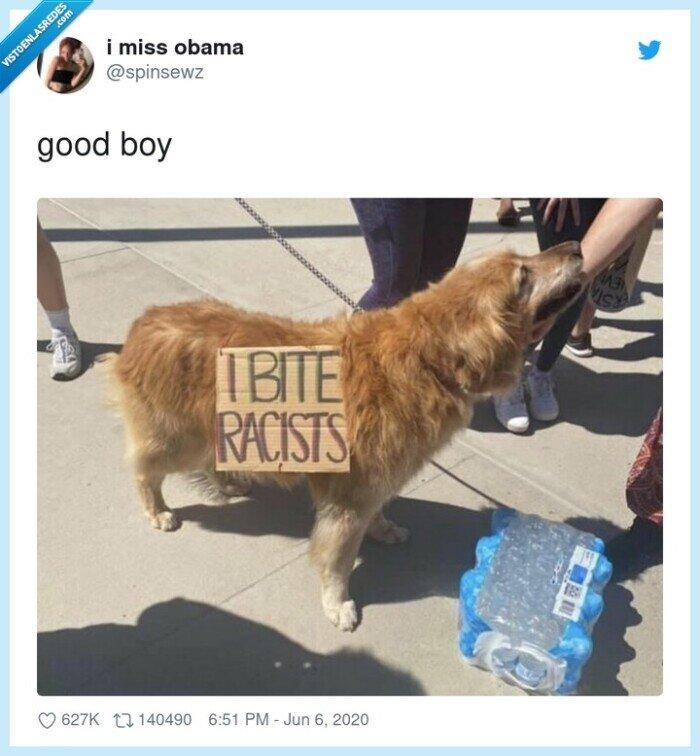 morder,perro,racistas