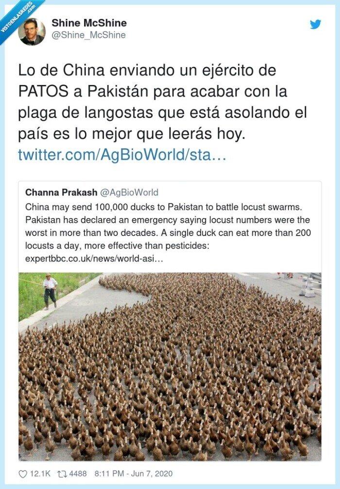 asolando,ejército,enviando,langostas,pakistán,patos