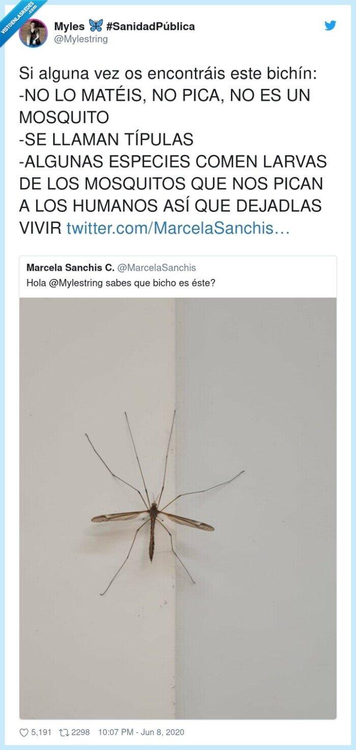 insecto,matar,mosquito,mosquitos,típulas