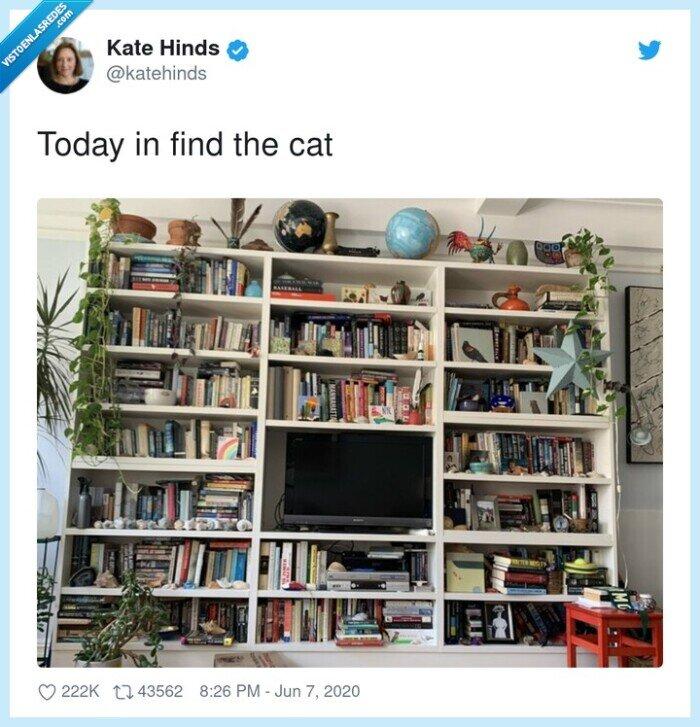 encontrar,estantería,gato,libros