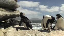 Enlace a Me acabo de dar cuenta que soy un pingüino, por @MperfectB